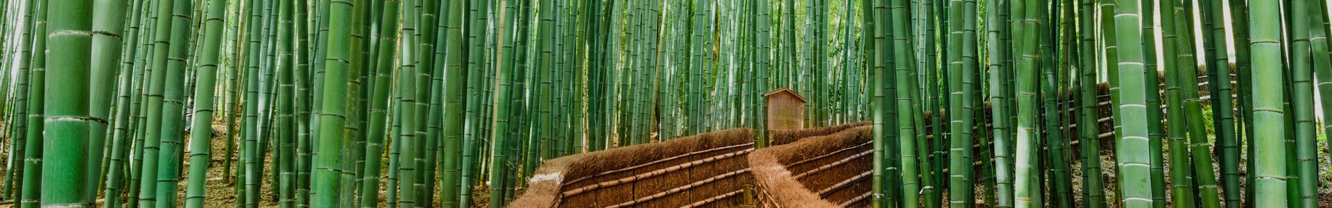 Bambus Ausgraben In 6 Schritten Anleitungencom